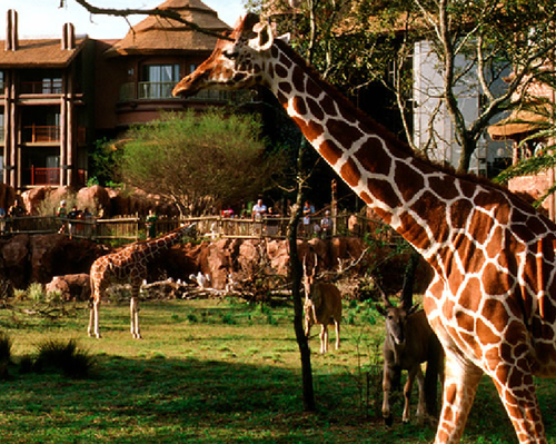 Jambo House at the Animal Kingdom Lodge. Not open in 1971, but the idea was there!
